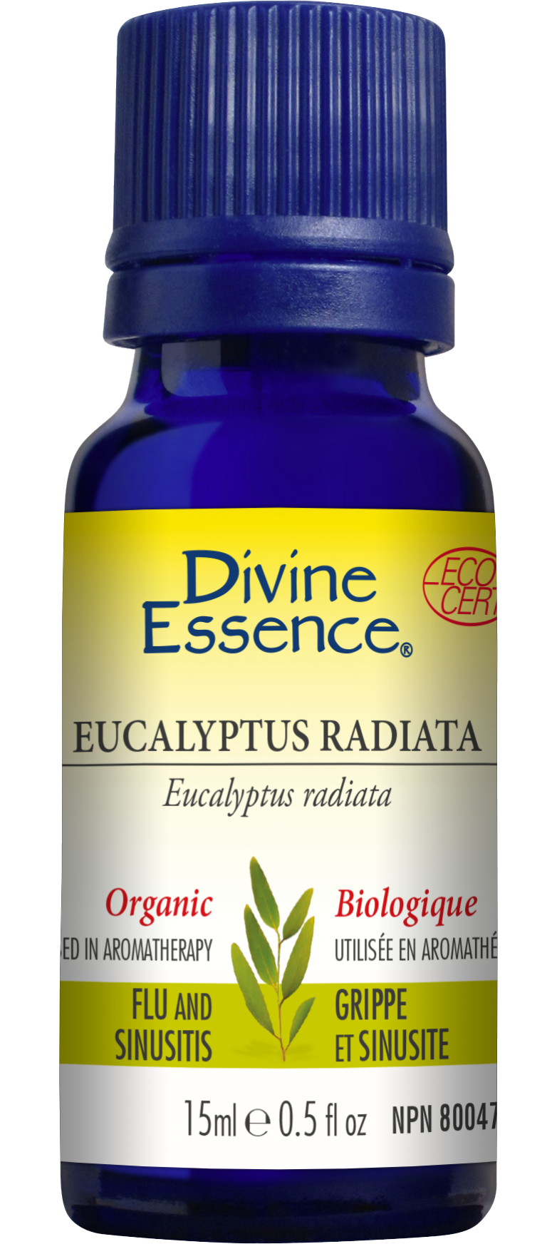 Eucalyptus Radiata 15ml